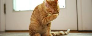 Penyebab-Kucing-Bersin